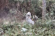 Operação Zangão termina com dois detidos por furto de colmeias