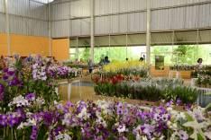São Gonçalo sedia 4ª Exposição de Orquídeas