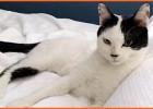 Esta desaparecido este gato gratifica-se para quem o encontrar