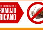 MEIO AMBIENTE: Prefeitura de Catas Altas prepara Dia D de combate ao caramujo africano