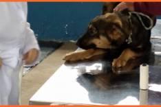 Saúde Pública – Prefeitura retoma castração de animais abandonados