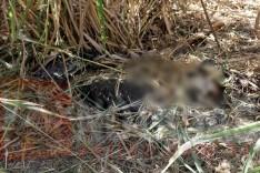 Durante capina no cemitério da Paz funcionaria da Itaurb encontra corpo em decomposição