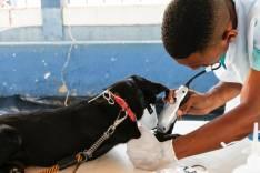 Saúde Pública – Prefeitura inicia programa de castração de animais domésticos