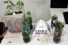 PM prende suspeito de trafico de drogas e 11 pés de maconha no bairro Gabiroba
