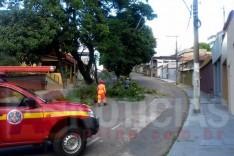 Bombeiros foram acionados para corte de arvore e desobstrução do transito no bairro Amazonas em Itabira