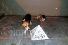 Polícia Militar prende autor de receptação e recupera cães furtados em Ferros