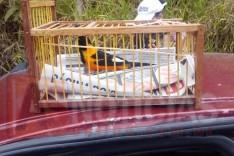 Rodoviários prenderam dois homens e apreenderam pássaros da fauna silvestre e espingarda em Santa Barbara