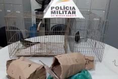 Policiais Rodoviários apreende dois pássaros da fauna silvestre na rodovia MG-434