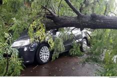 Município deve arcar com danos gerados por queda de árvore