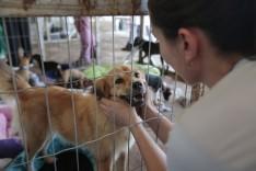 Vale promove feira de adoção de cães e gatos resgatados em Brumadinho