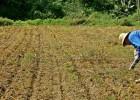 Prefeitura oferece curso para cultivo orgânico sustentável