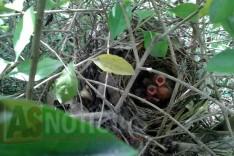 Moradores dos bairros Balsamos e Belvedere pedem pela preservação dos pássaros e animais da mata